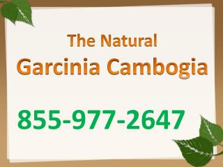 How does garcinia cambogia work?
