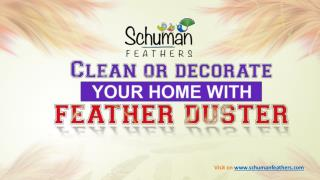 Clean your home with feather duster