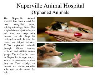 Naperville animal hospital orphaned animals