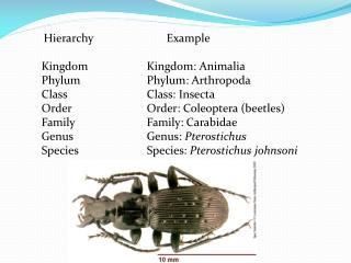 Hierarchy Example Kingdom Kingdom : Animalia Phylum Phylum : Arthropoda