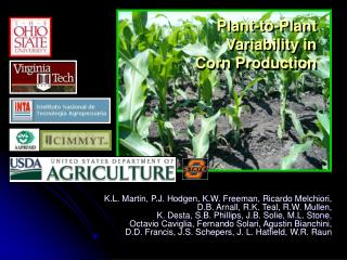 Plant-to-Plant Variability in Corn Production