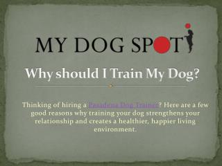 Why should I Train My Dog?