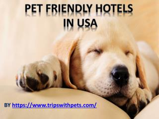 Pet-Friendly Policies Pet-Friendly Hotels Guide
