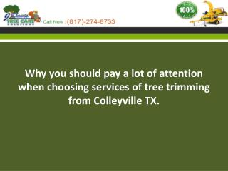 Why you should pay a lot of attention when choosing services of tree trimming from Colleyville TX.