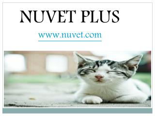 Nuvet Reviews | Top 5 Things to do before you Bring your New Kitty Home