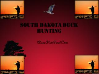 South Dakota Duck Hunting