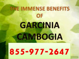 Lose Weight Naturally with Garcinia Cambogia
