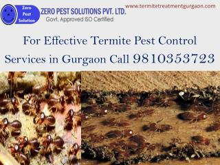 For Effective Termite Pest Control Services in Gurgaon Call 9810353723