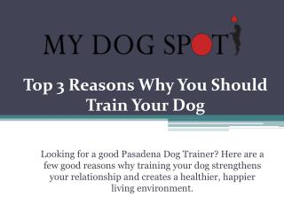 Top 3 Reasons Why You Should Train Your Dog
