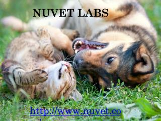 Nuvet - Nuvet Labs Reviews - Nuvet Plus Reviews