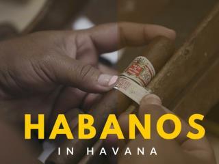 Habanos in Havana