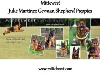 Mittewest.com - Julie Martinez German Shepherd Puppies
