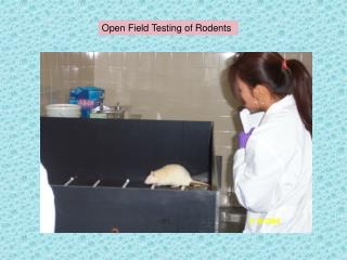 Open Field Testing of Rodents