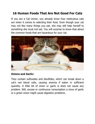 16 Human Foods That Are Not Good For Cats