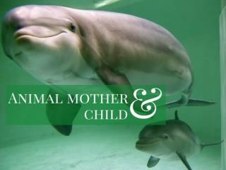 Animal mother and child