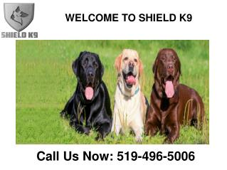 Shield K9 – Dog & Puppy Training | Online Products Store | Kitchener or Waterloo