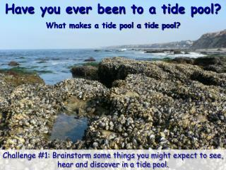 Have you ever been to a tide pool? What makes a tide pool a tide pool?