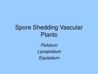 Spore Shedding Vascular Plants