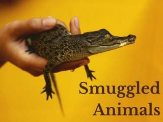 Smuggled animals
