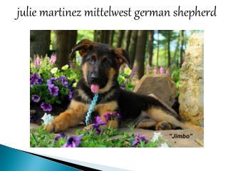 Julie Martinez Mittelwest German Shepherd