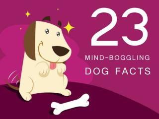 23 Mind Boggling Facts about Dog