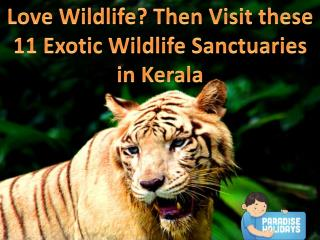 Love Wildlife? Then Visit the 11 Exotic Wildlife Sanctuaries in Kerala