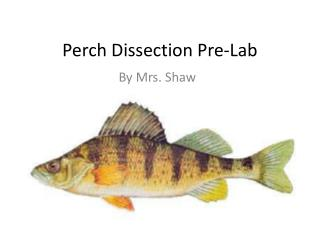 Perch Dissection Pre-Lab