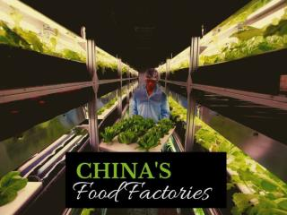 China's food factories