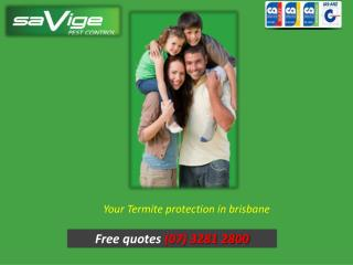 Your Termite protection in Brisbane - Savige Pest Control