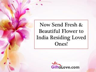 Now Send Fresh & Beautiful Flower to India Residing Loved Ones!