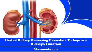 Herbal Kidney Cleansing Remedies To Improve Kidneys Function