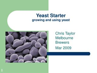 Yeast Starter growing and using yeast