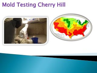 Mold Testing Cherry Hill