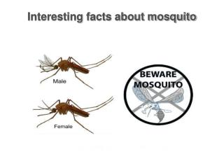 Some interesting facts about mosquito