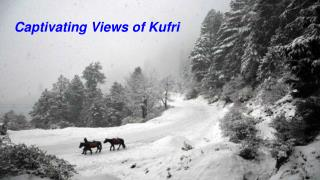 Places to visit in Kufri