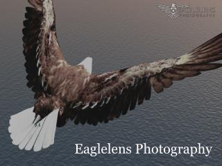 EagleLens Photography