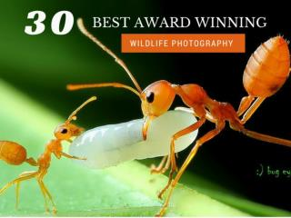 30 Best Award Winning Wildlife Photography