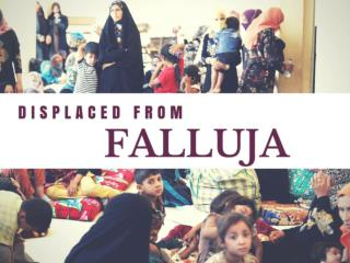 Displaced from Falluja