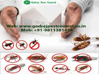 Very effective pest control dwarka call 9811381458