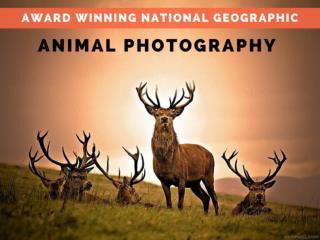 Award Winning National Geographic,Animal Photography