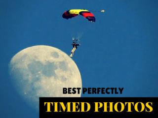 Best Perfectly Timed Photos