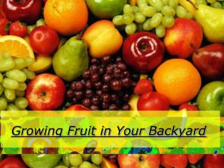 Growing Fruit in Your Backyard