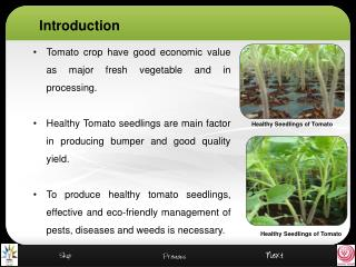 Tomato crop have good economic value as major fresh vegetable and in processing.