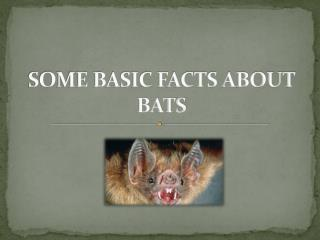 Some Basic Facts about Bats