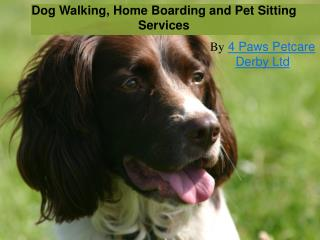 Dog Walking, Home Boarding and Pet Sitting services in Derby