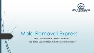 Affordable and 100% guaranteed mold removal