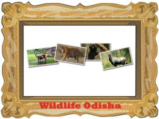 wildlife odisha