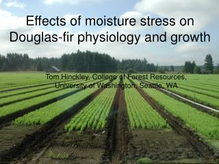 Effects of moisture stress on Douglas-fir physiology and growth