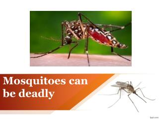 Mosquitoes can be deadly