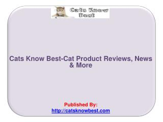 Cat Product Reviews, News & More